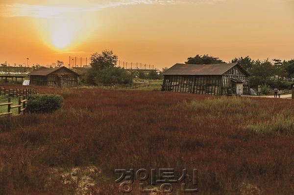 갯골생태공원_낙조 (7).jpg